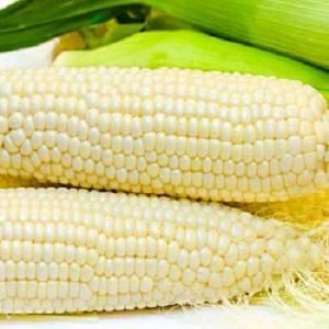 Учимся ухаживать за кукурузой в условиях открытого грунта