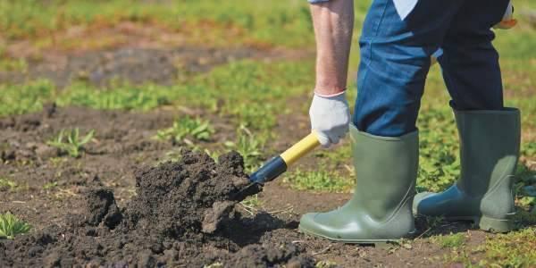 Выращивание фасоли лима — как правильно посадить, ухаживать, собирать урожай