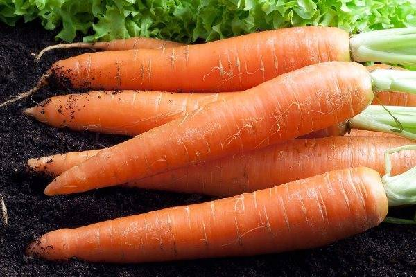 Морковь «детская сладость», «карамелька» и другие сорта овоща, которые считаются самыми сладкими: описание, применение, а также как сделать обычный вид вкуснее?