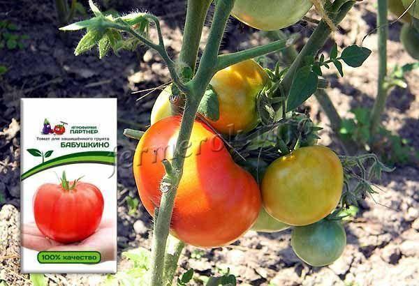 Томат бабушкин — описание сорта, урожайность, фото и отзывы садоводов