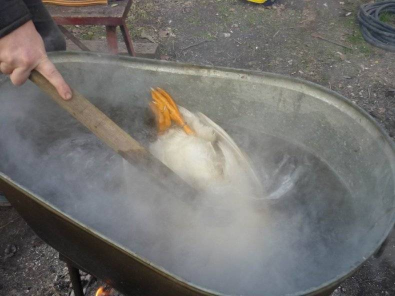 Как ощипать утку. как правильно разделать утку