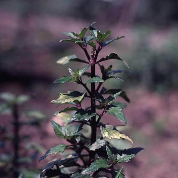 Редкие растения краснодарского края — обзор редких видов