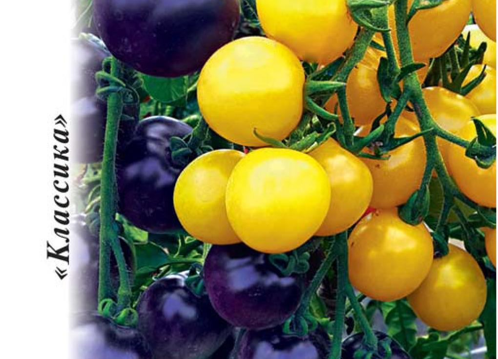 Томат дачные закрома – особенности и описание крупноплодного сорта
