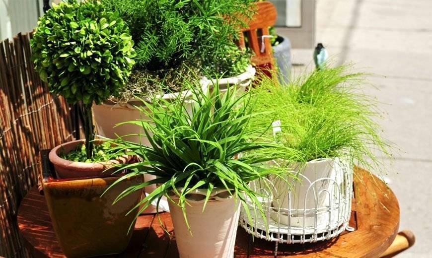 5 лучших удобрений для комнатных растений