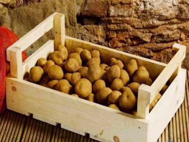 Описание сорта картофеля вега