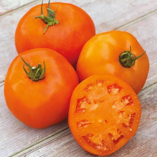 Томат апельсин: отзывы, фото, урожайность