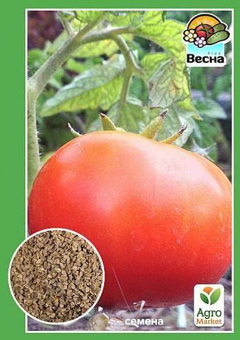 Характеристика гибридного томата лонг кипер, выращивание рассады и борьба с вредителями