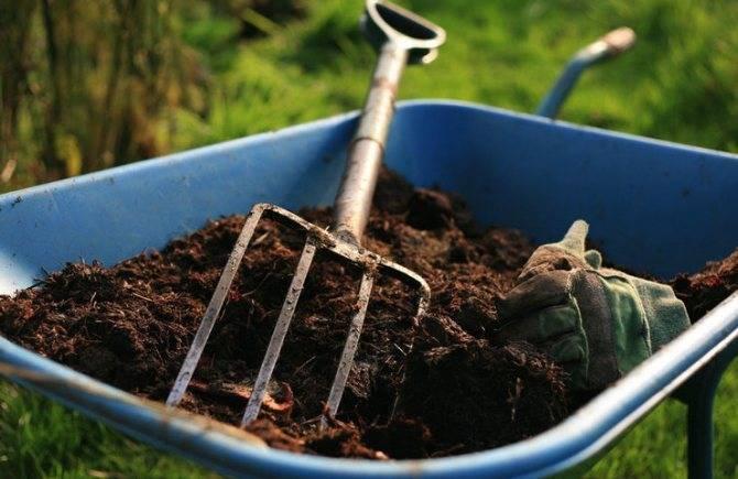 Удобрение тюльпанов: весной и осенью, виды удобрений