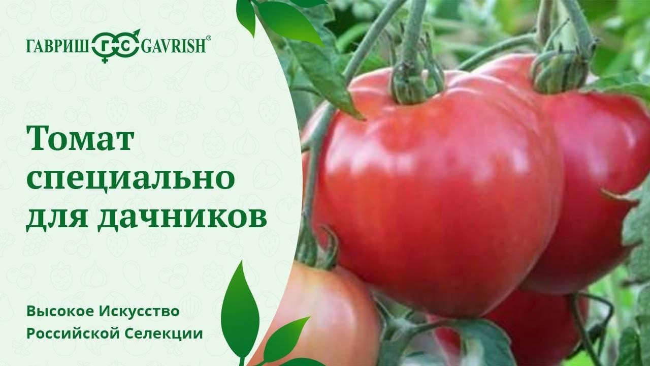 Высота томата «мясистый сахаристый» делает его великаном среди собратьев. описание высокоурожайного сорта помидора