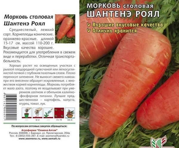 Лучшие сорта моркови для сибири: ранние, поздние, сладкие, крупные