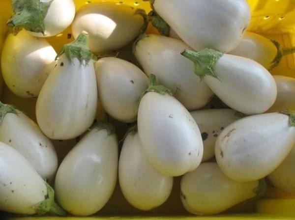 Баклажан вкус грибов — характеристика и описание сорта, отзывы, посадка и уход