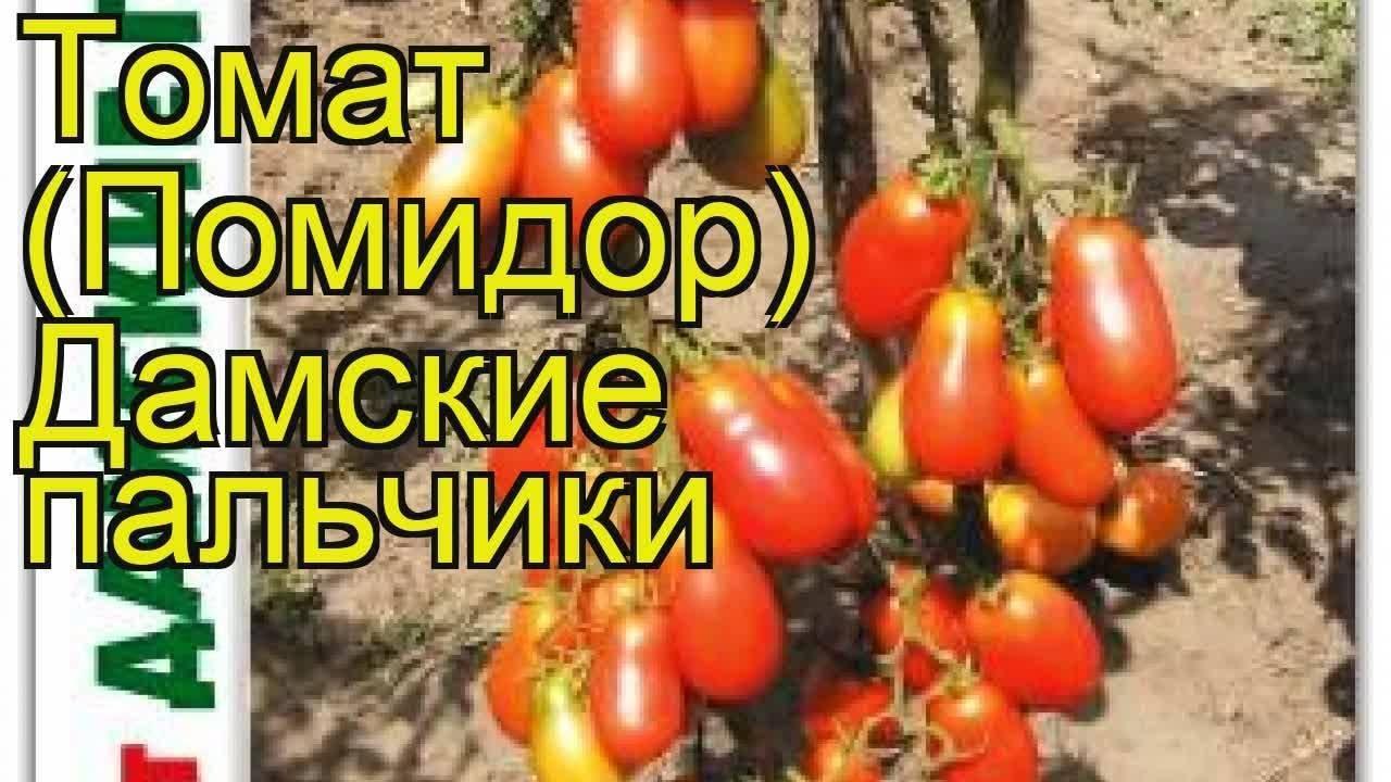 Прекрасный сорт для консервации и различных блюд — томат «дамские пальчики»: выращиваем самостоятельно