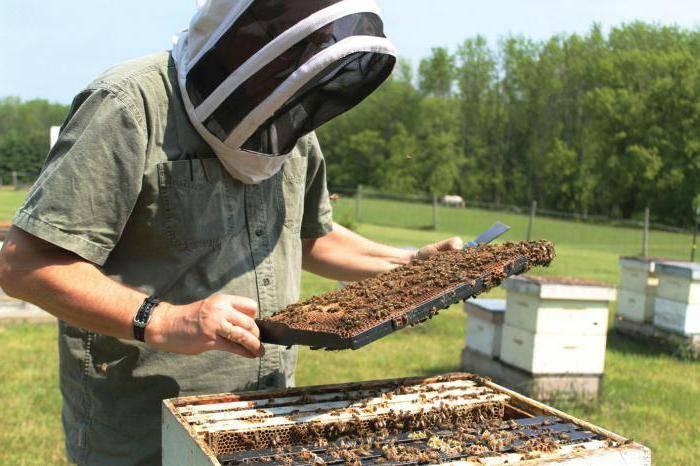 Лозеваль: инструкция по применению для пчел
