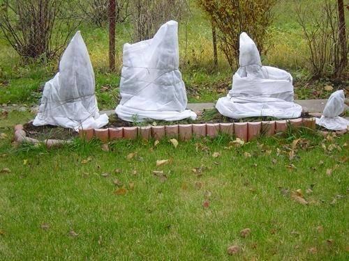 Как правильно укрывать и утеплять юкку на зиму? как дома устроить период покоя?
