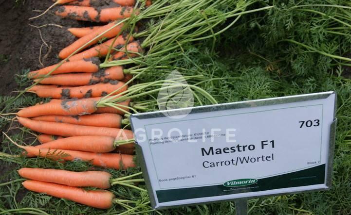 Лучшие сорта моркови — фото и подробное описание, отзывы