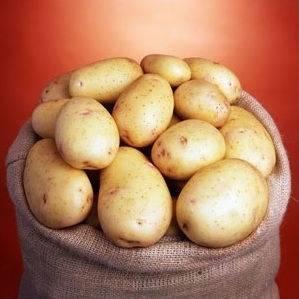 Картошка сорта банба (banba) — технология выращивания