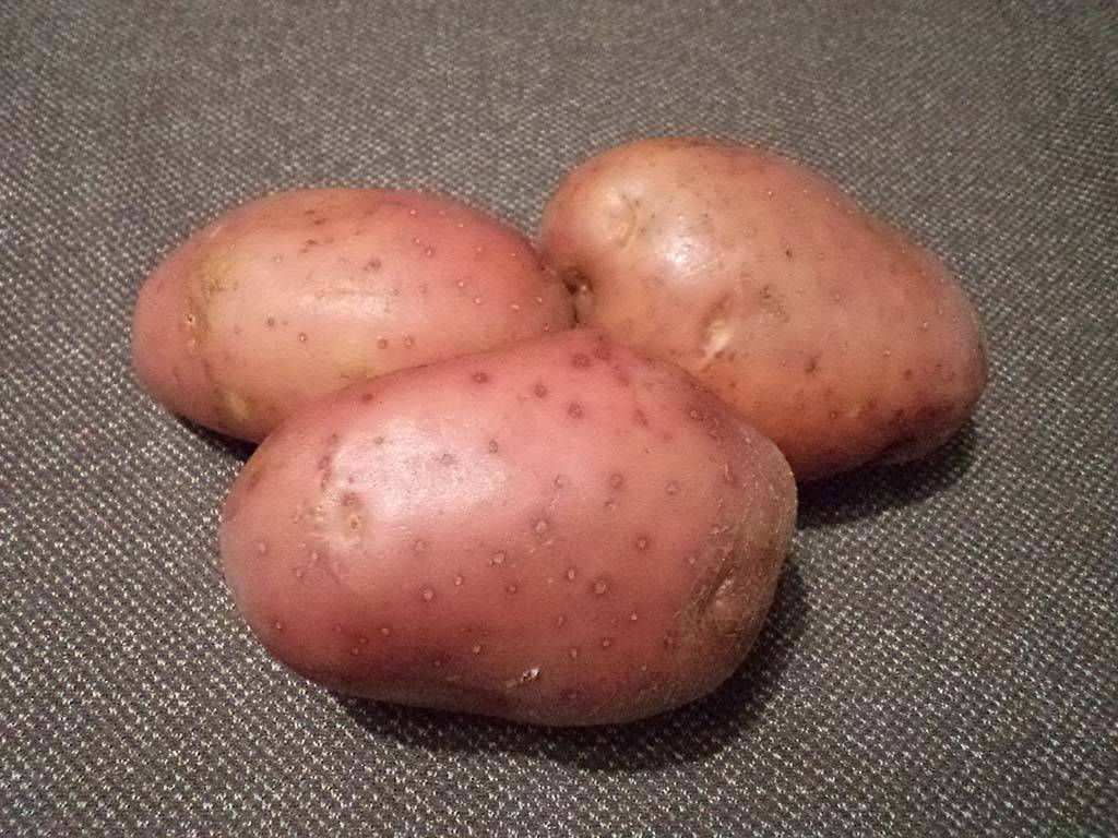 Сорт картофеля «манифест»: характеристика, описание, урожайность, отзывы и фото