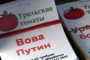 Описание сорта томата вова путин и его характеристики
