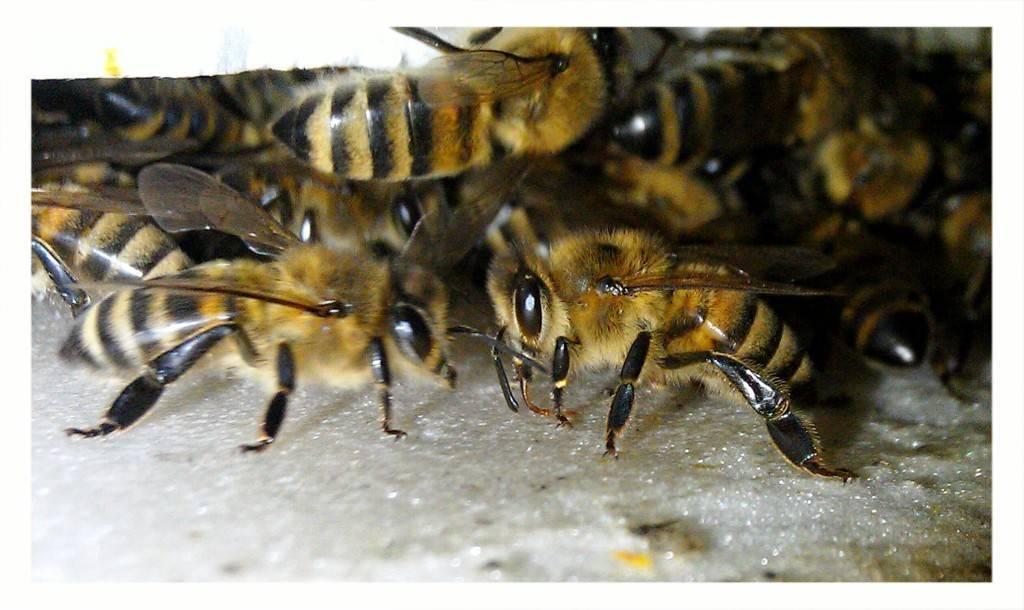 Правильное кормление пчел осенью