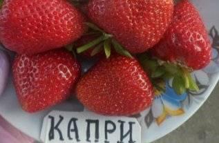 Клубника Капри
