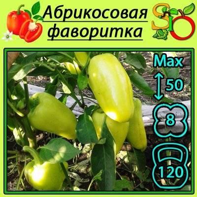Лучшие сорта болгарского перца