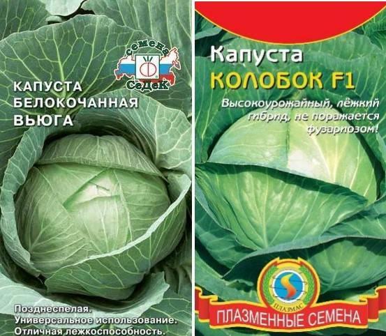 Капуста вьюга: описание сорта, отзывы и урожайность, фото