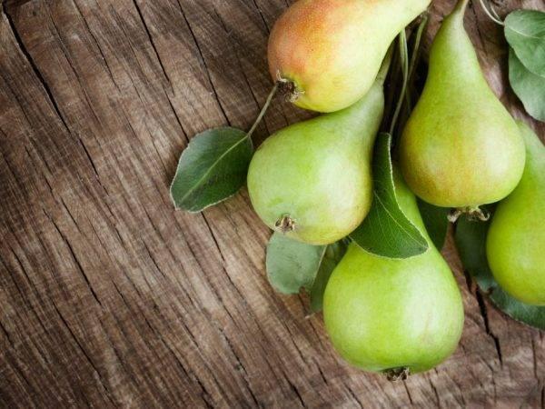 Характеристики сорта груши татьяна