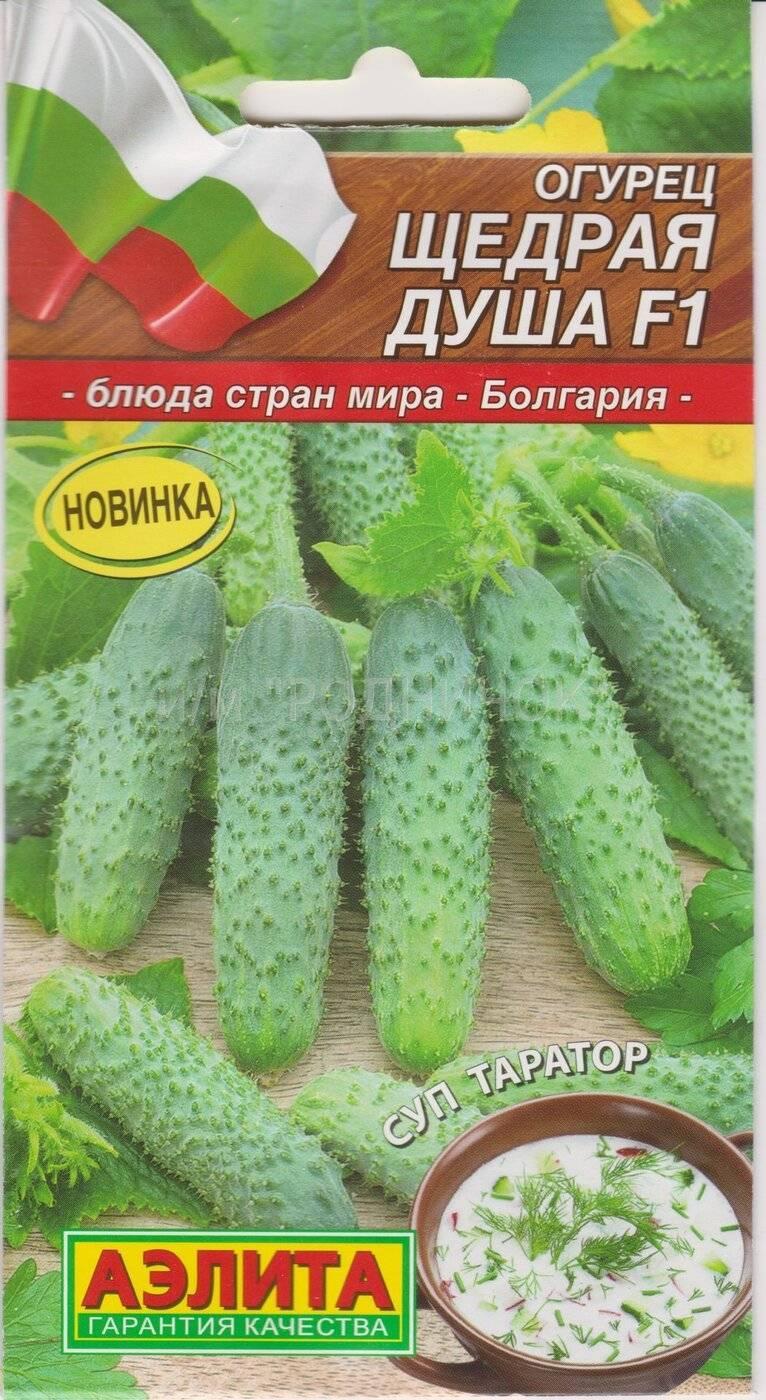 Популярный среди дачников гибрид огурцов «хрустик» с сочным хрустом и отличным вкусом