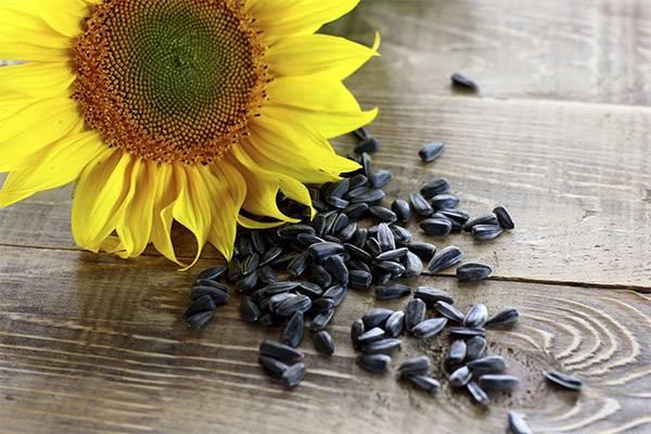 Польза и вред семечек подсолнуха для женщин. сырые или жареные семечки