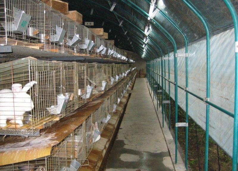 Клетки для кроликов своими руками: чертежи, размеры и фото | home-ideas.ru
