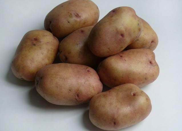 Картофель сорта барин описание фото отзывы