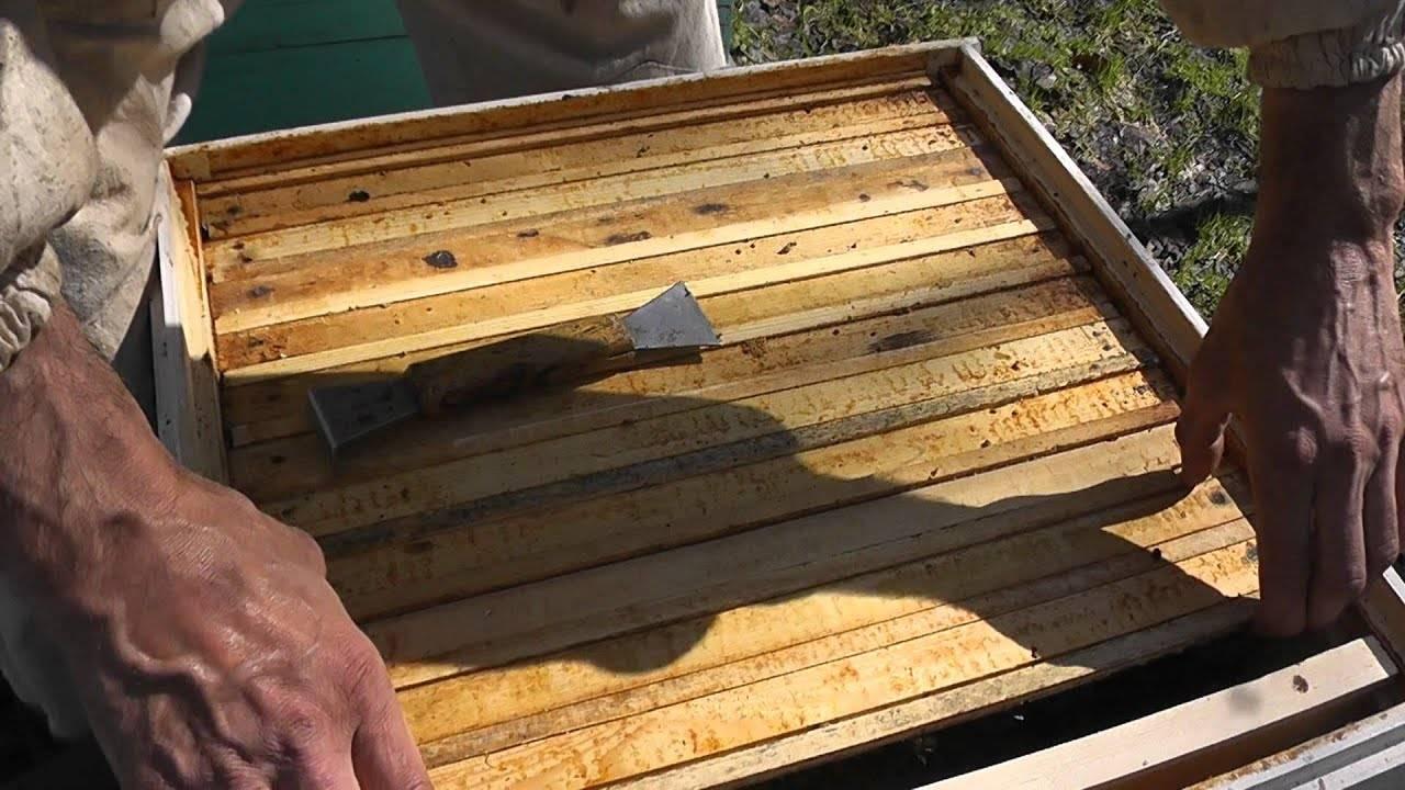 Когда ставить рамки вощины на отстройку сотов   практическое пчеловодство