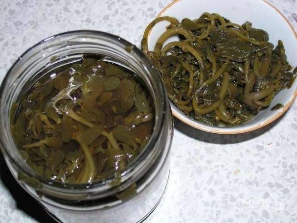 Портулак: как готовить, как употреблять в пищу