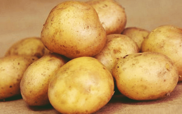 Российский картофель сорта удача: самый ранний, самый вкусный!