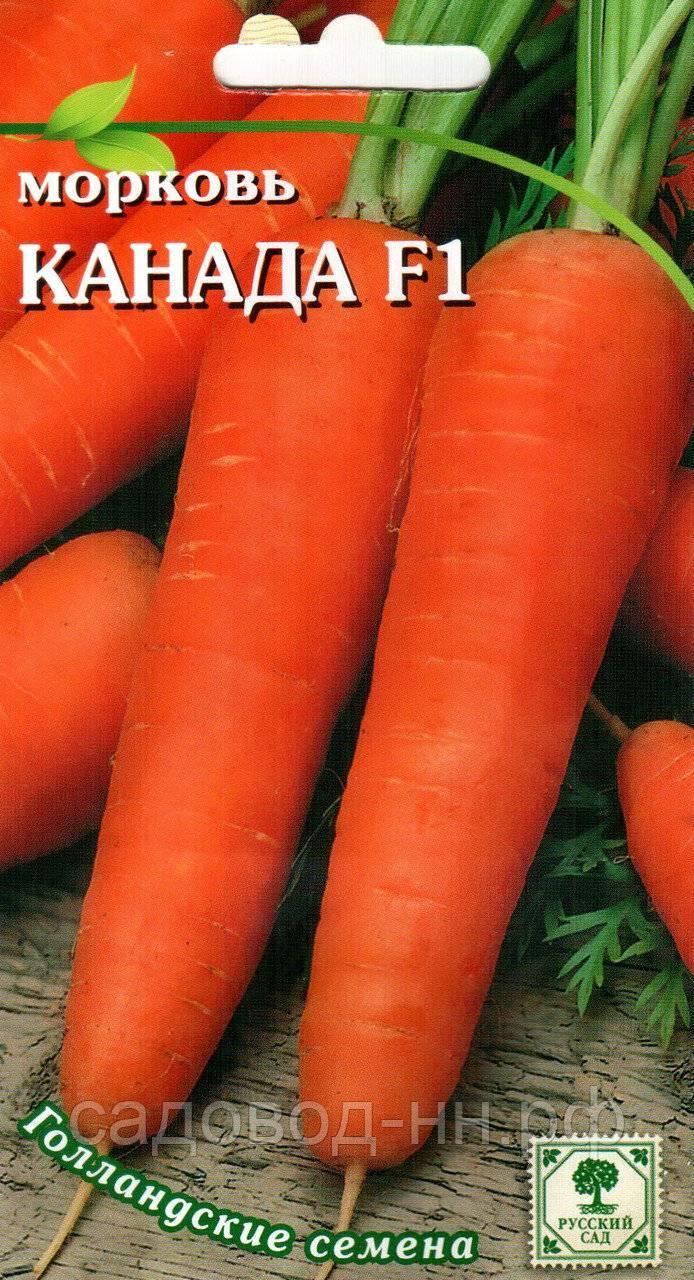 Высокоурожайный гибрид моркови «канада f1»: характеристики и отзывы о выращивании