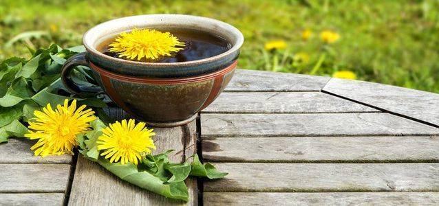 Чай из корня одуванчика польза и вред