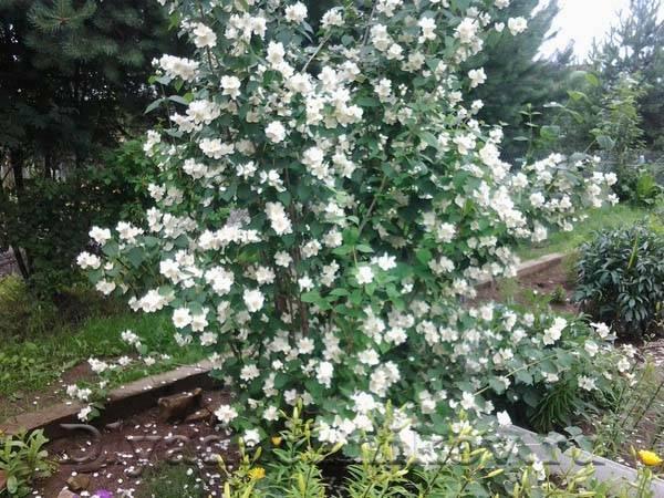 Каталог многолетних цветов для дачи: фото с названиями и описанием