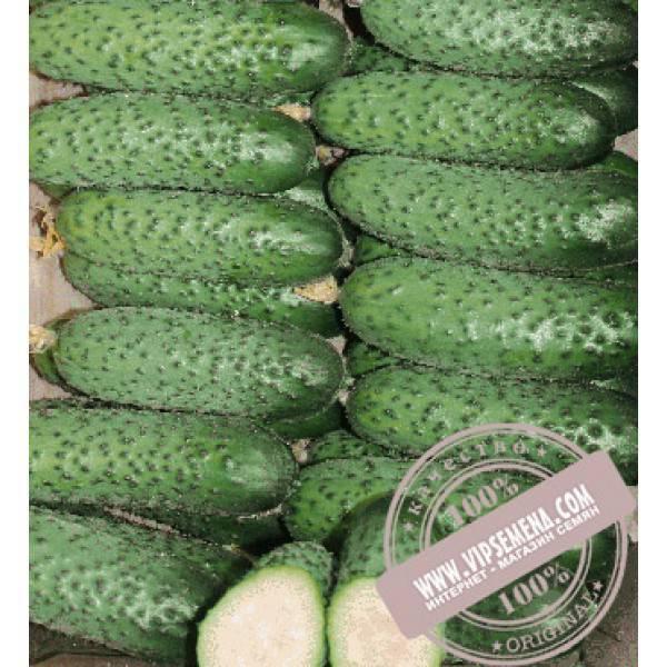 Пучковый гибрид огурцов «рмт f1»: фото, видео, описание, посадка, характеристика, урожайность, отзывы