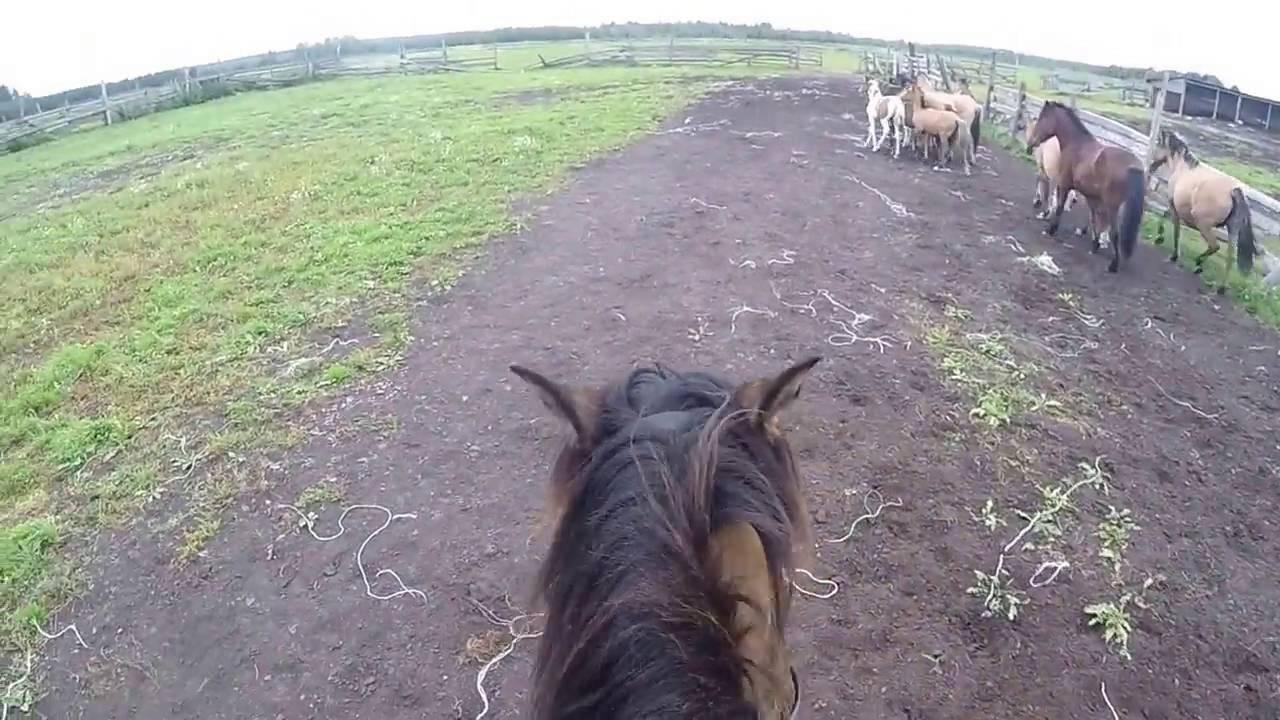 Башкирская лошадь — википедия