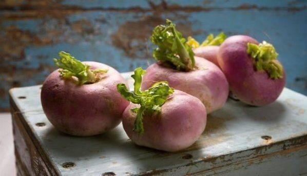 Правила хранения репы на зиму в квартире или погребе, как заморозить овощ