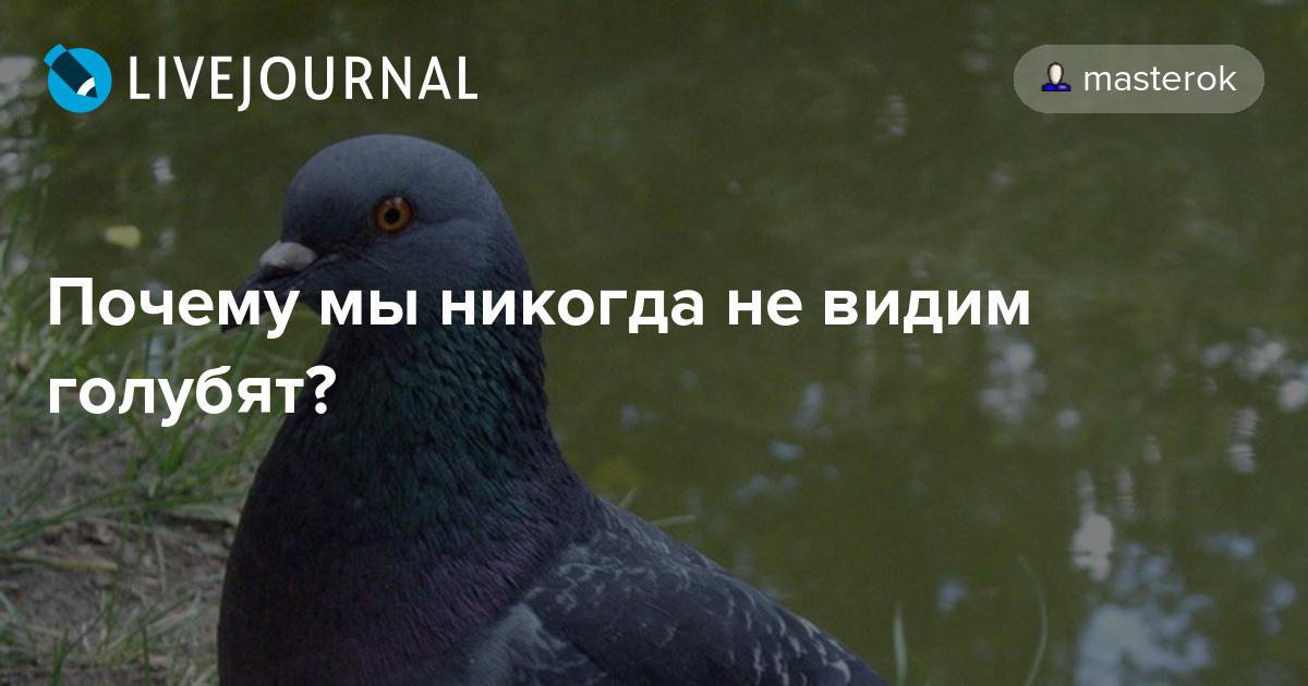 Птенцы голубей — как они выглядят и где обитают?