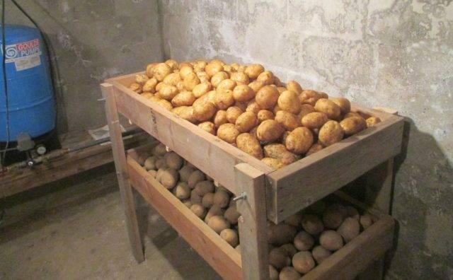 Картофель джура