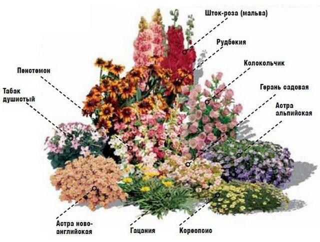 Цветник из многолетников непрерывного цветения
