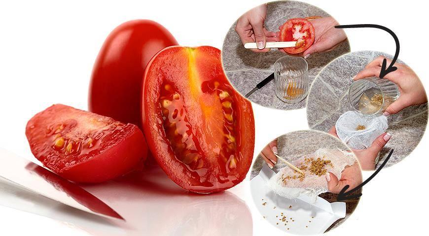 Как собрать семена помидоров правильно