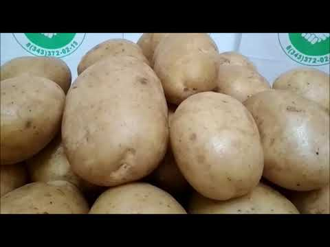 Описание картофеля аризона. выращивание сорта и уход за ним