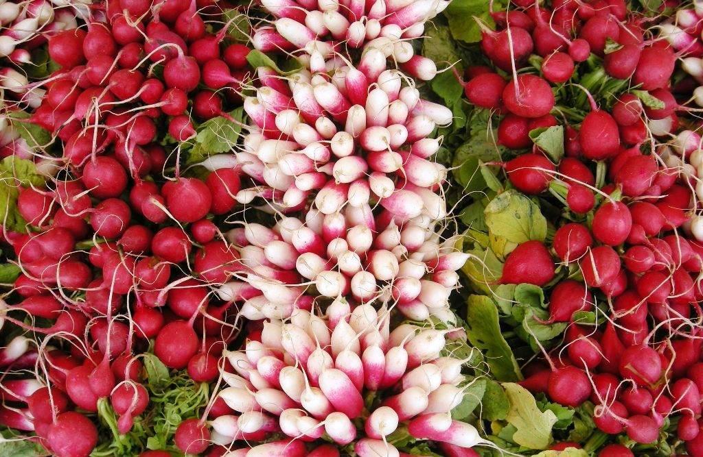 Выращивание редиса в открытом, закрытом грунте и в домашних условиях, уход за корнеплодом