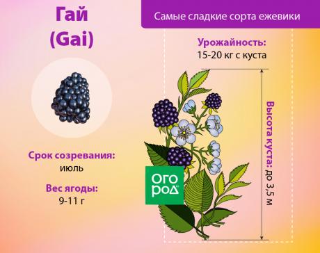 Ежевика полар описание сорта