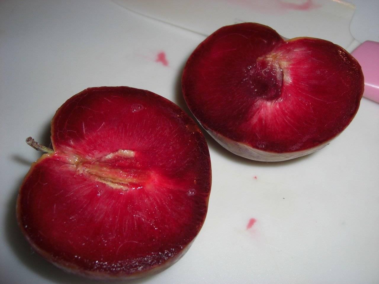 Характеристика и описание абрикоса чёрный бархат