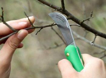 Как избавиться от корней облепихи