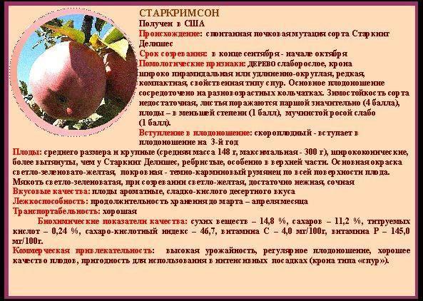 Груша старкримсон: описание сорта, фото, посадка и уход